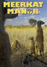 Watch Meerkat Manor